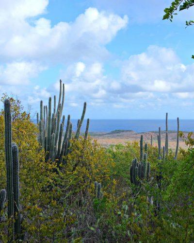 Christoffelpark cactus